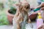 Ayude a aliviar las alergias de su perro con estos 5 remedios naturales