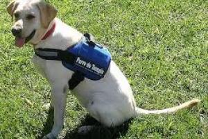 ¿Qué son los perros de servicio o los perros de asistencia?