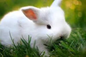 Trastorno de columna vertebral en conejos