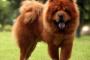 Artritis de articulaciones múltiples en perros