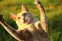 Datos fascinantes sobre las patas de tu gato