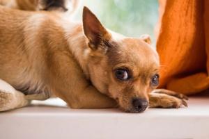 ¿Qué causa los ruidos del estómago del perro?