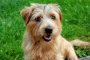Diarrea sensible a los antibióticos en perros