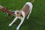 Dueños de perros: está bien pedir ayuda