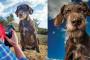 Fotografías de perros viejos