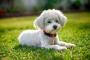 Inflamación del abdomen debido a la fuga de bilis en los perros