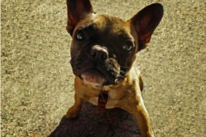 3 Hacks simples que podrían salvarle la vida a tu perro