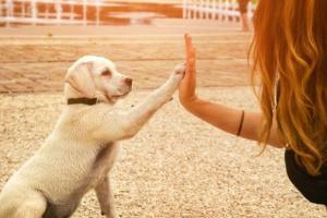Cómo proteger a su mascota del calor del verano