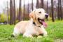Engrosamiento del revestimiento del útero y saco lleno de líquido en los perros