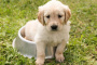 ¿Por qué los perros persiguen sus colas?