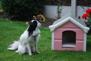 Crea un espacio acogedor para tu perro