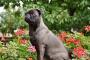 Cómo enseñar a un perro a sentarse y quedarse (Una breve guía)