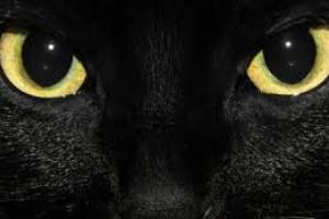 Datos y mitos sobre los gatos negros