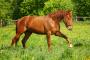 Hematomas en caballos