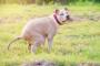 Infección por Salmonella en perros: síntomas, causas y tratamientos.
