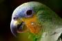 Proporcionando un hogar para un pájaro de mascota