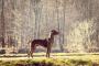 Malformación de columna vertebral en perros