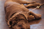 La Zonisamida para el tratamiento de convulsiones en perros y gatos
