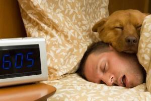 ¿Cómo el horario de verano afecta a su perro?