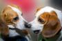 Cachorro macho o hembra: ¿Qué es mejor?