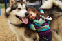 10 razones por las cuales los perros nos hacen más felices y más saludables