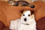 Viviendo con ambos gatos y perros
