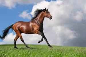 Huesos rotos en caballos