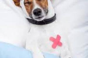 Latido irregular del corazón en perros