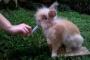 Neumonía en conejos