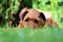 Cómo evitar que un perro cave en el patio (lo que debe saber)