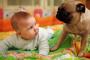 Comportamiento animal: como bebé, como perro