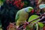 10 artículos cotidianos que son tóxicos para las aves