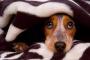 Proteja a su perro de los peligros domésticos comunes