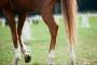 Artritis equina en caballos