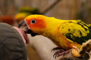 Comportamiento hormonal en las aves