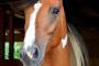Consejos y sugerencias para mantener a tu caballo saludable este invierno
