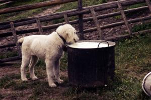 Top 10 alimentos más venenosos para perros