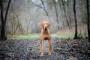 Problemas cardíacos (fibrilación y aleteo) en perros