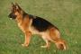 Narcolepsia y cataplejía en perros