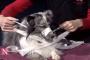 Cómo hacer un perro hocico de gasa o tela