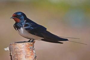 Cómo acostumbrar a su ave a probar nueva comida