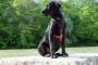 Inflamación del disco vertebral en perros