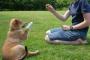 Entrenando a tu perro