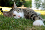 Las convulsiones en gatos. ¿Qué debe hacer?