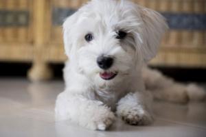 Sibilancias de perros: causas y opciones de tratamiento