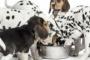 Porqué la salud de su perro depende de las dietas de la etapa de la vida