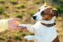 Cómo enseñar a tu perro a dar la pata