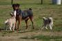 Envenenamiento por agente hipercalcémico en perros