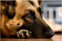 Mi perro tiene un tumor: ¿qué debo hacer?