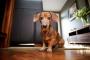Incontinencia en perros: causas y prevención.